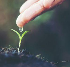 Naturalizacja zapachu | Flora&Fauna